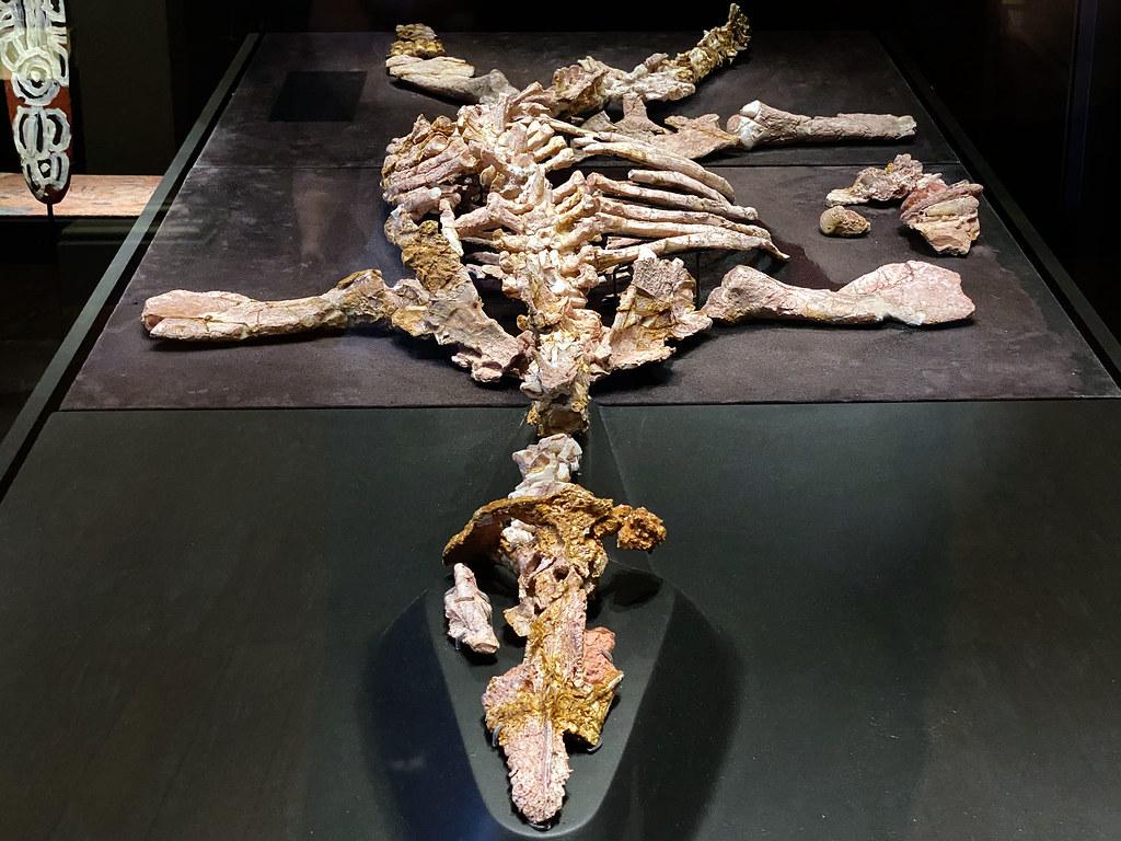 Opalised pliosaur