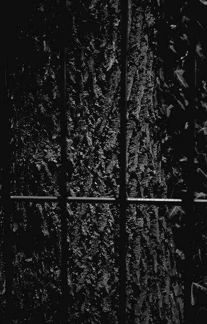 bark behind bars