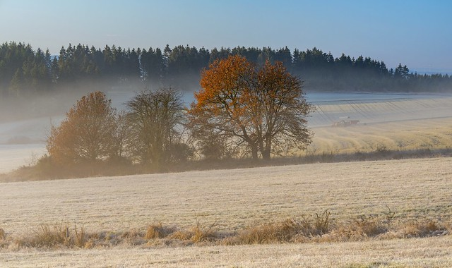 *A frosty November morning in the Hunsrück*