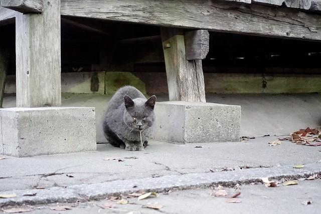 Today's Cat@2020−12−15