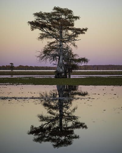 autumn sunset usa reflection tree fall water landscape photo texas image photograph lonetree caddolake easttexas baldcypress f32 harrisoncounty november iso100 100mm 2020 ¹⁄₂₀₀sec ef100mmf28lmacroisusm mabrycampbell november22020 20201102caddolakecampbellb4a7521 fav20 fav30 fav10