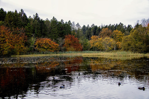 autumn donadea duckpond kildare ireland eire mbe october canon eos 80d 2020 water ducks colours reflection trees forest park landscape