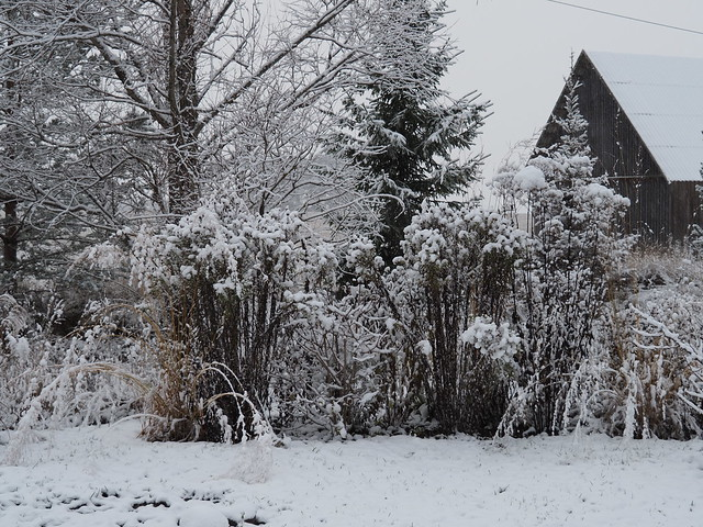 First snow of Nov. 30th