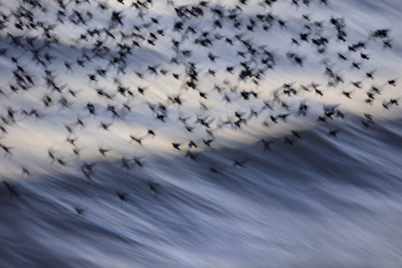 Starling Blurmuration over Sea