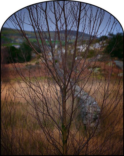 Ebenezer And The Tree