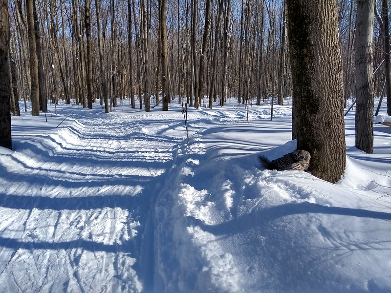 jeu, 02/14/2019 - 13:33 - Parc Nature - Hiver