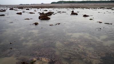 Living shores of Pulau Semakau (East)