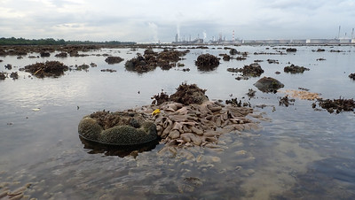 Petrochemical plants off Pulau Semakau (East)