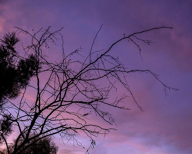 2020-12-063-Sunset Tree-1