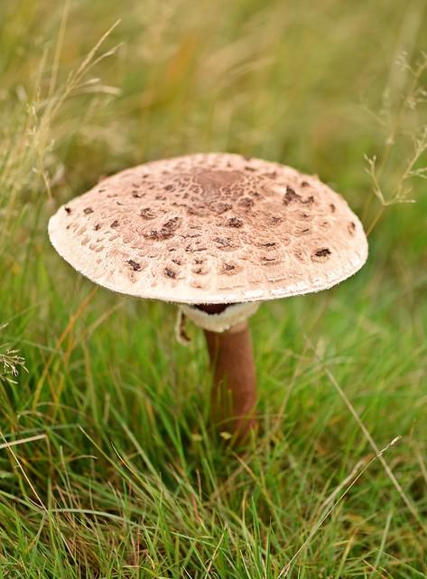 Fungi 2020 - 143