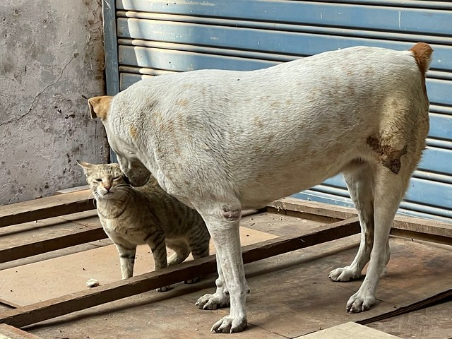 City Moment - Dog Loves Cat, Near Golcha Cinema