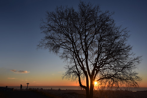 barcelona bcn silueta silhouette color colour sunrise sunset alba amanecer luz light tree arbol nature natura naturaleza people running sol sun mar sea cielo sky