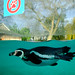 "<p><a href=""https://www.flickr.com/people/10645937@N03/"">Colin Dorey</a> posted a photo:</p>  <p><a href=""https://www.flickr.com/photos/10645937@N03/50726546566/"" title=""Penguin Pool ZSL""><img src=""https://live.staticflickr.com/65535/50726546566_e24f8c9157_m.jpg"" width=""240"" height=""171"" alt=""Penguin Pool ZSL"" /></a></p>  <p>Winter  -Fuji x100v</p>"