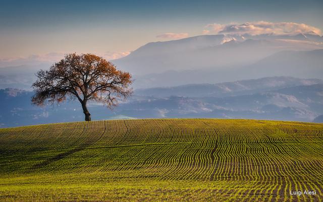 Marche countryside - San Severino Marche