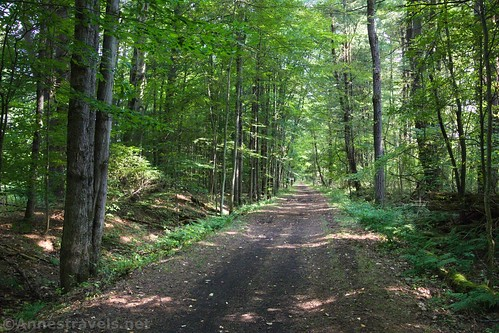 The Genesee Velley Greenway south of Oramel, New York, in the forest