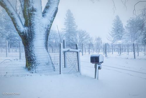 winterlandscape vineyard landscape nevadacity sierranevadafoothills canonef24105mmf4lisusm topazstudio canon5dmarkiii winterscape california thestreetwhereilive cementhilroad lightroom6 snowylandscape oaktree nevadacounty mailbox