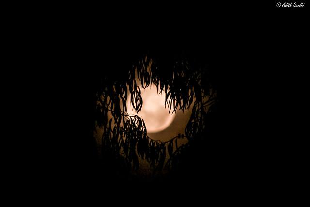 La noche de la selva con sus luces y sombras