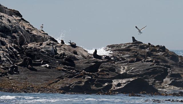 Lüderitz, Seals