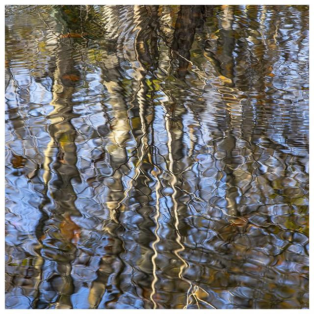 Bridge Swamp #13 2020; Swamp Reflection #3