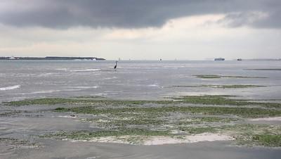 Shorebirds on Chek Jawa, northern sandbar