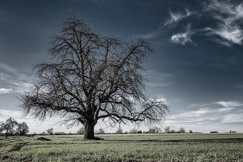 anlässe bäume em5iii himmel landschaft mzuiko124028 omd olympus pflanzen solitär wanderung wolken clouds landscape loner miraclesofcreation mutedcolours mutedcolour sw savingtheclimatebytrees sky trees