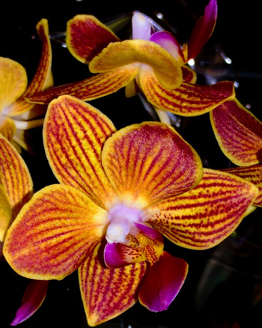 Pretty Orchid flower
