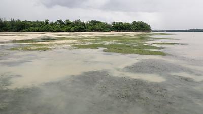 Seagrass meadows on Chek Jawa, Dec 2020