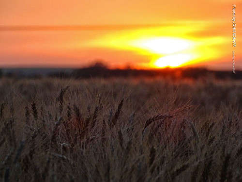 kansas 2020 june june2020 summer summer2020 rileycounty prairie konzaprairie field agriculture wheat wheatfield evening sunset aftersunset dusk color colour colors colours landscape usa