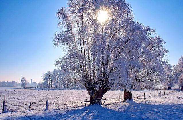Rauhreif Winter Landschaft Tettenham bei Tettenweis, (Niederbayern)