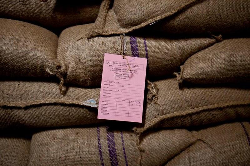 Cơ hội cho cà phê đặc sản Robusta (1)