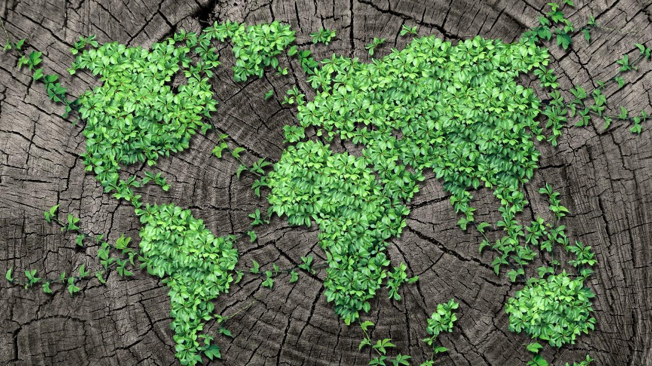 世界各国的树叶描绘.