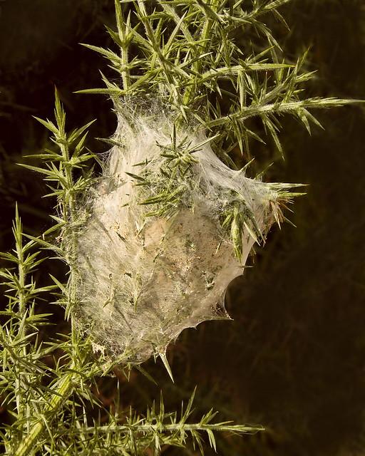 Nursery Web