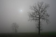 Filastrocca della nebbia