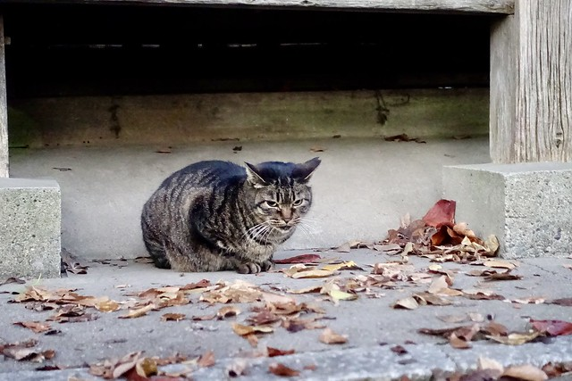 Today's Cat@2020−12−17
