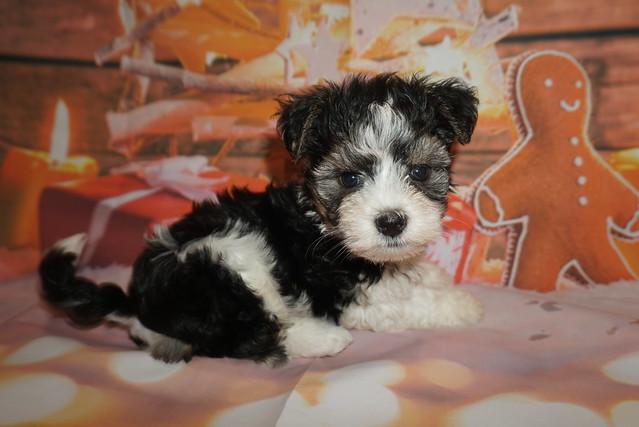 1 Jingles (Ripley) 2lb 7oz 7 weeks old (23)