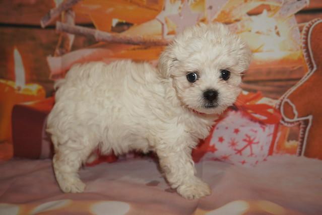 3 Joy 1lb 15oz 7 weeks old (15)