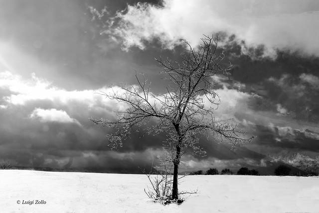 Alone in the winter