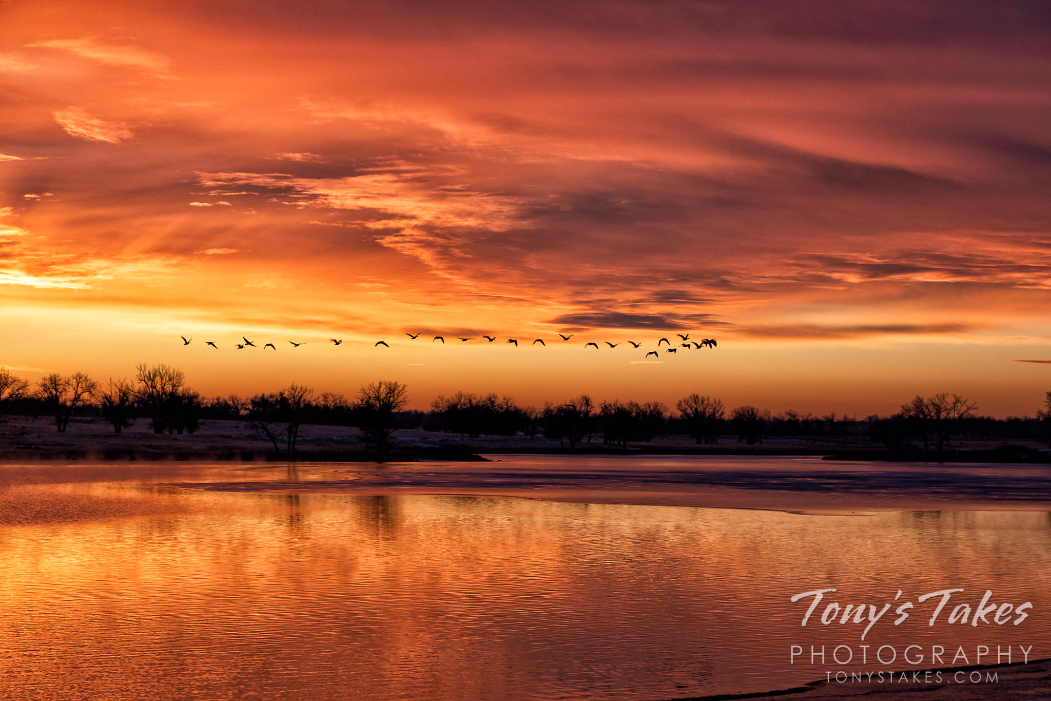 Geese take flight at sunrise