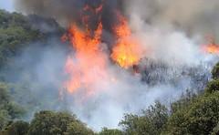 Per gli incendi della Sardegna