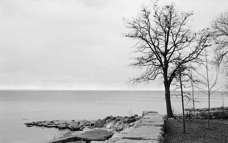 Tree on the Edge of the Lake at Tannery Park