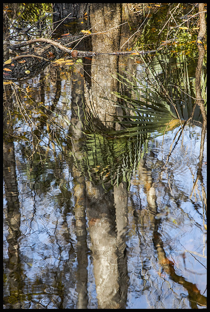 Bridge Swamp #14 2020; Swamp Reflection #4