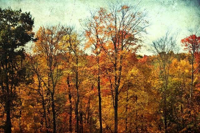 Autumn Awesomeness #54