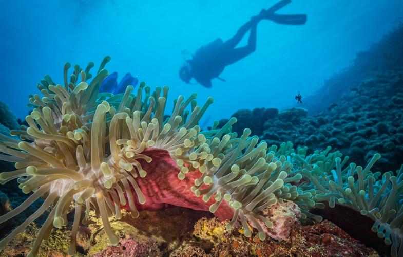 唯獨這裡沒有白化 東非沿岸新發現生態熱點 科學家直讚「快樂珊瑚」