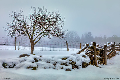 winter fence snow maine highlands snowfence snowcoveredfence tree lonetree baretree branches rockwall appletree landscape trees nature countryside rural agriculture farm farming piscataquis piscataquiscounty newengland mainehighlands art