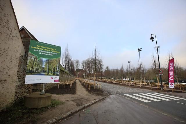 Préservation et gestion des arbres d'alignement RD 191 aux Mesnuls
