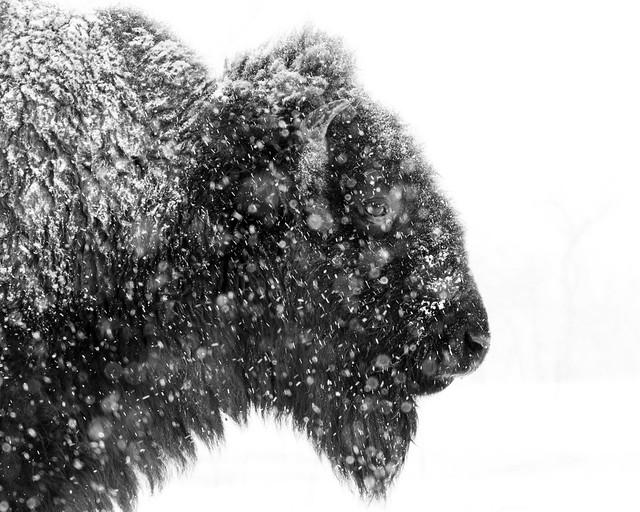 Winter Profile