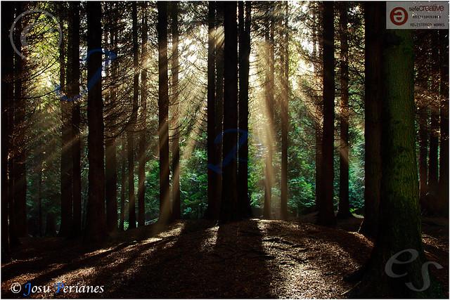 El Bosque animado - The animated Forest