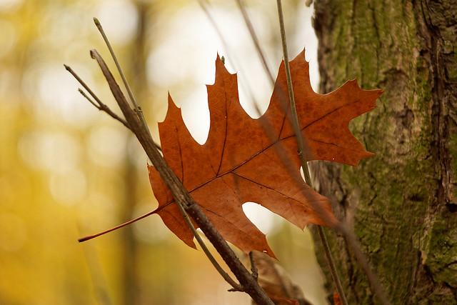 autumn hugs (Explore: December 18, 2020)