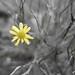 Flower-00309-2