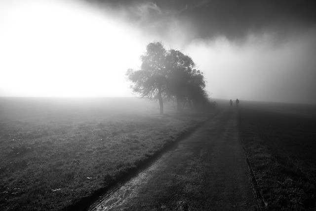 The winter sun, the mist, a tree and a family hike